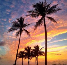 As The Peach Slowly ripens.....Courtesy of FtLauderdaleSun
