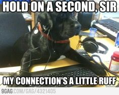 Tech support Dog is having internet issues