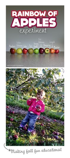 {Rainbow of Apples Experiment} I absolutely love this photo of all the different variety of apples. What a fun way to play & learn.