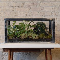 Chrome-plated Terrarium - A great place to keep a pet praying mantis!