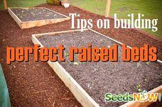 grow foodgarden, raised bed gardens, rais bed, garden idea, lil garden