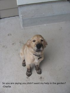 So you are saying you didn't want my help in the garden?