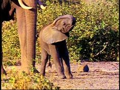 ▶ Baby Einstein 04 - Baby Dolittle World Animals.avi - YouTube