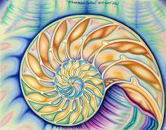 Fibonacci Spiral by BunPrint