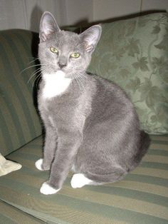 """Carolyn S says her cat Finn has """"a beautiful facial structure, just like Mr. Anderson Cooper."""""""