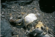This is George Mallory who fell to his death in 1924. | Dead Bodies On Mount Everest