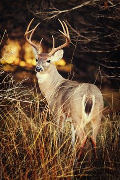 Hill Country  Texas Deer Photo  Wildlife by slightclutter on Etsy, $40.00