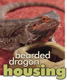 Bearded Dragon housing checklist