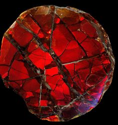 A lusciously deep red Ammonite shell.