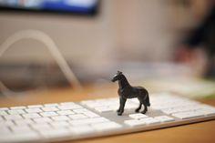 tiny tiny horse