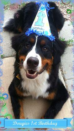 Dougie on his 1st birthday!