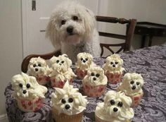 OK, these are not cocktail cupcakes but they're too adorable to ignore.