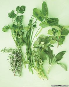 Drying herbs from the garden