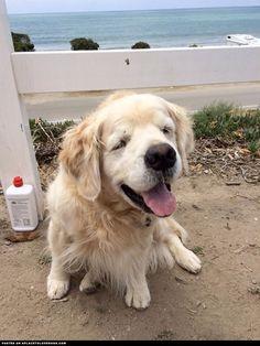 lovable-puppy-sonny puppi puppi, dog