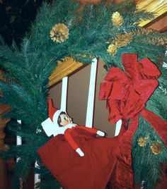 Sleeping in the wreath