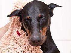 doggi super, dogs, pet, dri towel, doggi doormat, floor cleaner, super shammi, towels, soggi doggi