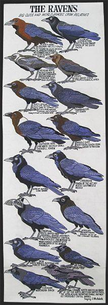 List of corvids.