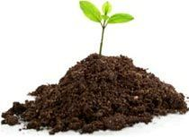 10 Homemade Organic Pesticides - Global Healing Center