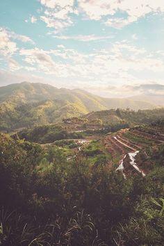rice paddies~ღஜღ~|cM