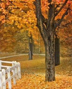 """""""On a rainy day in Brookside Park, near Pittsburgh, the surroundings looked just like a painting of autumn! (Courtesy njk1951/myBudgetTravel)"""