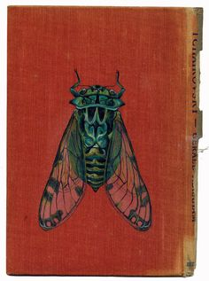 cicadidae by Rose Sanderson