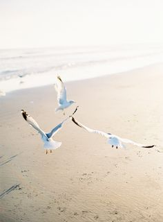 fly free ...