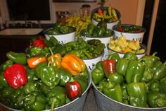 3 Simple Tips To Plan Now For A Successful Garden Next Year.     (Pictured: Peppers just picked from this year's garden)