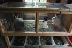 I like the simple cage design. The only thing is that if they were outside, they would need a wind/winter barrier. -- stacking functions in permaculture farming.  Rabbitry over worm bins.  Larger cage and windrows in ground for worms