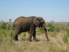 Safari! South Africa