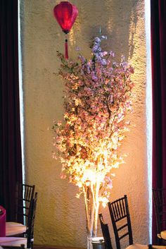 A spotlight shines on an exquisite arrangement of cherry blossoms (bloom March and April in MO)