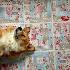 (And Sweet Puppy) :) Quilting Tutorials and Fabric Creations   Quilting In The Rain