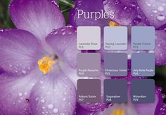 Wrapped in mystery and intrigue, purple gives you the power to express your creative and spiritual side. Bold, vivid shades can be regal and unconventional. While lighter tones of lilacs and violets create a calming retreat from the ordinary. Try #purple on one wall as an accent to create a unique, powerful statement. #inspiration #color