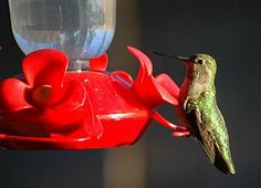 How to Attract Humming Birds