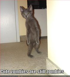 Cute zombies are still zombies... cat zombie :)