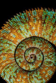 chameleon tail   www.facebook.com/loveswish