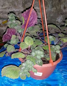 Mis plantas on pinterest verano ficus and no se - Plantas de sol directo ...