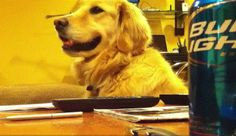 Jammin Dog LOVES the Guitar (video)! | Stuff-About.com