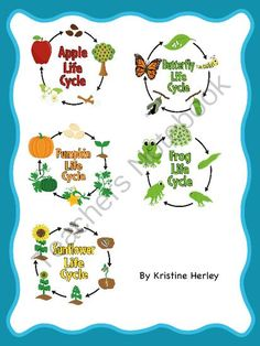 Life Cycle Bundle Give Away!!! Enter for your chance to win 1 of 3.  Life Cycle Bundle (52 pages) from Kristine's Classroom Creations on TeachersNotebook.com (Ends on on 8-22-2014)  This life cycle bundle includes nine different life cycle activities for each: frog, butterfly, sunflower, apple, and pumpkin.