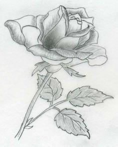 Rose Drawings   Various rose drawings