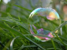 bubble bubble - beautiful bubble