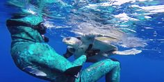 Diver Saves Sea Turtle And Receives Adorable Thank You