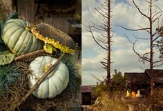 Feeling Fall on The BULLETIN at Terrain #pumpkins #sunflowers #cedar