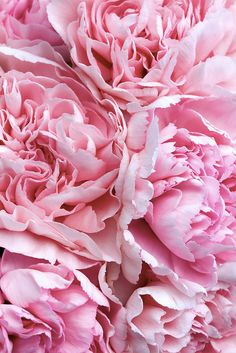 carnations.  All year round availability