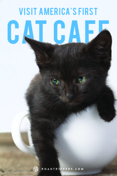 America's very first cate cafe is open for business.