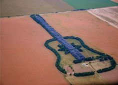 Argentine Man Plants Giant Guitar-shaped Forest ~ Pedro Ureta unexpectedly lost his wife to a brain aneurysm. Devastated by the loss of his love, he decided to create a shrine to her memory in their field that could only be seen above-head from an airplane. Ureta chose a guitar because it was his late wife's most loved instrument.
