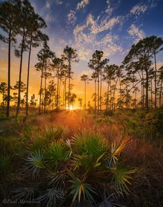 ✯ Sunset in the Everglades