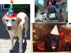 Labrador Birthdays Are the Best | It's a Lab Thing