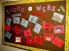 Food webs science board.