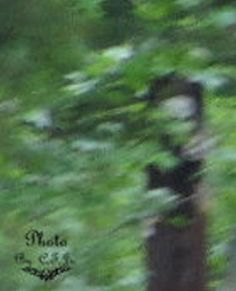 2011 Dover, Tennessee. #alien #aliens #ufos #paranormal