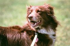 Owner Linda works in the Madison Warehouse where she does embroidery and works on the packing line. This is her Australian Shepherd, Breezee, who was born 1-1-11. Keeping fit with daily walks, Breezee loves training and her newest skill is catching a Frisbee.
